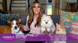 "Embrace Pet Insurance Launches New ""Safety FURST"" Video Series  Featuring Advice from Celebrity Dog Trainer Laura Nativo"