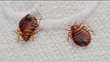 Summer Travel Tips: How to Prevent Bed Bugs from Coming Home with You after Vacation