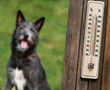Keeping Pets Safe and Healthy during Summer's Dog Days
