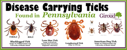 Disease Carrying Ticks Found in Pennsylvania
