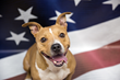 Pay It Forward with Best Friends Animal Society to Save 10,000 Pets in 10 days by July 4th