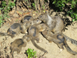 Mills College Biology Professor Coauthors Research on the Social Personalities of California Ground Squirrels