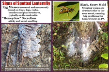 Signs of Spotted Lanterfly