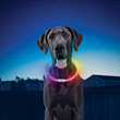Nite Ize Brings Safety, Security, and Light-Up Fun with New Pet Products