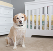 Don't Wait to Prepare the Family Dog for Baby's Arrival