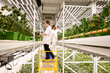Fluence Significantly Increases Yield and Secondary Metabolites in San Francisco Cannabis Vertical Farm