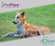 PetPace and Orivet Announce Groundbreaking Canine Pregnancy Study