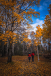 Autumn in Newfoundland and Labrador Brings Foliage, Festivals and Favorable Rates