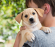 How to Make the Perfect Match during Adopt-a-Shelter-Dog Month
