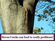 Cabling Weak, Heavy Branches is Important for the Health and Safety of the Tree and Giroud Tree and Lawn Explains Why Cabling a Tree Now Can Prevent Huge Costs Later