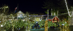 Ll Bean Christmas Trees.L L Bean Lights Up The Holidays With Northern Lights