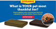 1-800-PetMeds® Commences the Giving Season with the Thankful Pet Sweepstakes!