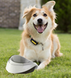 The American Pet Products Association Promotes Healthy Living for Good Nutrition Month