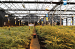 GrowSpan Publishes The Definitive Guide to Why Greenhouse Growing is Best for Cannabis