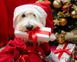 Six Perfect Presents for Family Dogs and the People Who Love Them