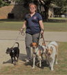 Animal Behavior College dog trainer graduate Kim Jukes Meals on Wheels for Pets project