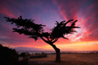 """Lonesome Cypress Tree"" - Alameda, California"