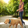 No leash? No problem. Nite Ize Introduces The Perfect Off-Leash Solution for Dog Owners