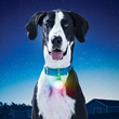 Pet Owners Light Up at New Nite Ize Pet Visibility Products