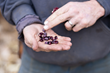 Healthy Food Ingredients Publishes White Paper on Anthocyanins in Suntava Purple Corn™