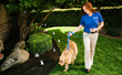 Invisible Fence® Brand Lends Tips for National Train Your Dog Month