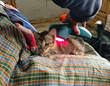 Noah Would Have Wanted This in His Ark - Maya Foundation Rehabilitates Rescued, Injured Animals with the Help of Multi Radiance's Innovative Laser Therapy