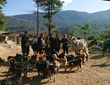 The Barnyard Bhutan Animal Rescue & Sanctuary in Paro, Bhutan welcomes any animal in need.  On just two and a half acres, more than 400 animals live together in harmony.