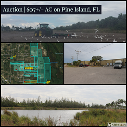 607+/- acres | Selling in 39 parcels