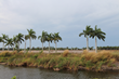 607+/- acres | Homesites, Packing House, Farmland & Waterfrontage