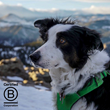 Only Natural Pet Announces Certification as a B Corp™