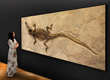 The Wilensky Gallery Brings Fossil Art from the Eocene to New York City, in an Upcoming Summer Exhibit