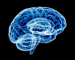 A stylized image of a translucent brain