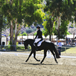 VetStem Biopharma Shares the Story of San Fransisko Who Advanced in His Dressage Career After Being Treated with VetStem Cell Therapy