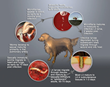 Salt Lake City, Utah, Ranked #1 in CAPC's Top 10 Cities Heartworm Report for February