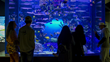 The Tennessee Aquarium's New Island Life Gallery Now Open