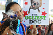 Sonoma-Marin Fair Calls For Applicants to Compete For Fame and Philanthropy in the 2019 World's Ugliest Dog® Contest