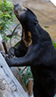 VetStem Regenerative Cell Therapy Helps Arthritic Sun Bear at the World-Famous San Diego Zoo