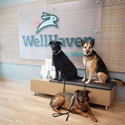 WellHaven Pet Health Family of Practices Announces