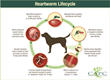 Overland Park, KS, Ranked #1 in CAPC's Top 10 Cities Heartworm Report; April is National Heartworm Awareness Month
