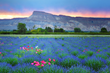 Feeling the Festival Season with Sports, Music, Aeronautics and Lavender in Grand Junction, Colorado