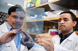 Drs. Gokul Das and Chetan Oturkar in their lab at Roswell Park.
