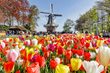 Floral Travel Blooms: USTOA Tour Operators Spotlight Colorful Itineraries