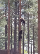 Bearizona to Celebrate National Black Bear Day and the Anniversary of Rescuing Four Bear Cubs with Donation to Nonprofit