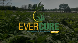 Evercure Launches Ecommerce Website and Provides Education