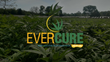 Evercure Launches Ecommerce Website and Provides Education On CBD Oil's Benefits
