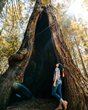 Explore the Grove of Old Trees in Sonoma County