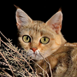 Alley Cat Rescue Sterilizes Hundreds of Cats in South Africa to Help Save the African Wildcat