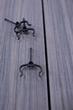 CAMO® EdgeClip™ and EdgeXClip™ Approved for use by Deckorators® Composite Decking