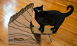 Cardboard Safari Introduces Line of Eco Friendly Cat Scratchers