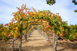 Visit Temecula Valley Celebrates Autumnfest with Food, Wine, Entertainment, Festivals & Harvest Fun